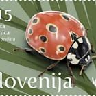 Fauna - Ladybird - Eyed Ladybird