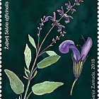 Flora 2018 - (Sage)