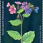 Flora 2018 - (Lungwort)