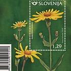 Flora Mountain Arnica