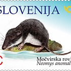 Fauna 2018 - Mediterranean Water Shrew