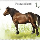 Fauna 2018 - Domestic Animals - Posavina Horse