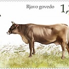 Fauna 2018 - Domestic Animals - Brown Cow