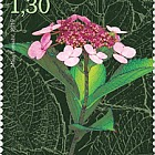 Hydrangeas - Mountain Hydrangea Stamp