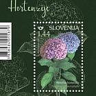 Hortensia De Hoja Grande