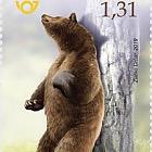 Fauna - Brown Bear