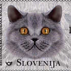 The Domestic Cat - British Shorthair
