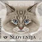 The Domestic Cat - Neva Masquerade
