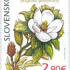 Protección de la naturaleza - el jardín botánico de Košice - Magnolia Grandiflora