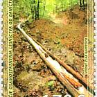 150° Anniversario Dell'indipendenza Della Silvicoltura Dall'attività Mineraria (1871)