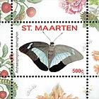 Papillon 2016 - Arawacus Lincoides