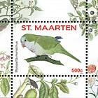 Birds 2016 - Myiopsitta Monachus