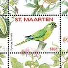 Birds 2016 - Pyrrhura frontalis