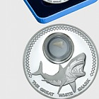 Shark Tooth Coins – Great White Shark