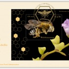(Vienna) - World Bee Day