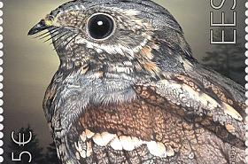 Oiseau de l'Année - Le Vejar Européen