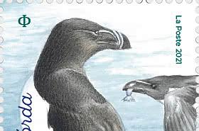 Birds Of The Islands - Torda Penguin