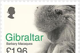 Europa 2021 - 'Barbary Macaques II'
