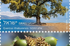 Arbres d'Israël