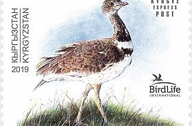 Bird of the Year - The Little Bustard