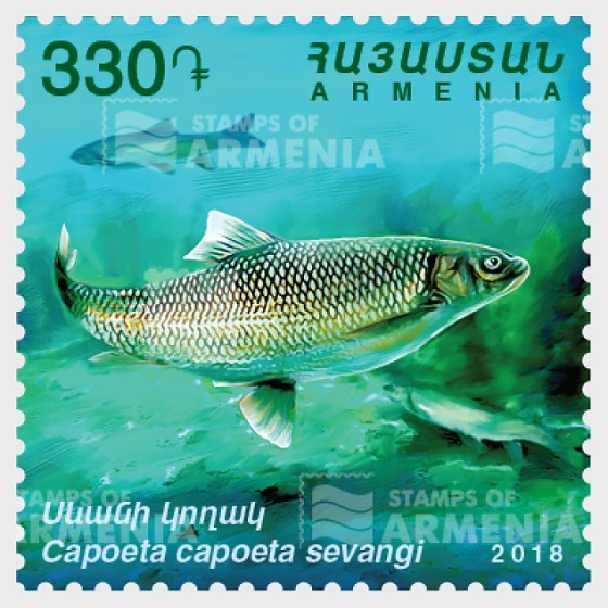 Flora and Fauna of Armenia - Capoeta Capoeta Sevangi - Set