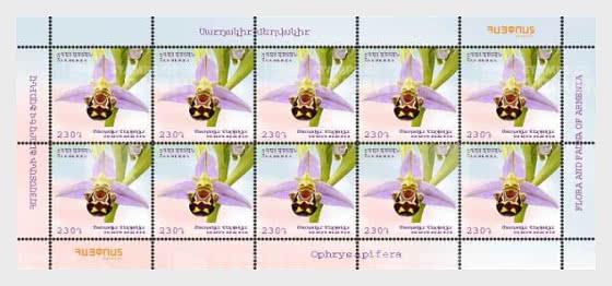 Flora and Fauna of Armenia (230) - Ophrys apifera - Sheetlets