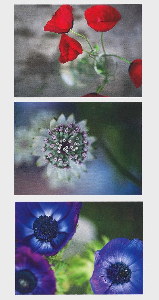Postal Stationery - Flowers - Postal Stationery