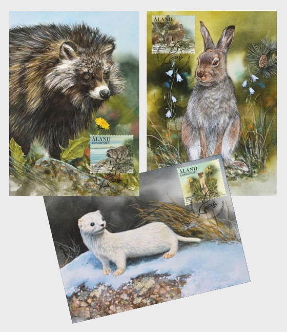 Forest Mammals - Maxi Cards