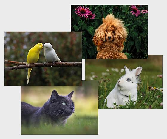 Papelería Postal 2020 - Mascotas - Postales