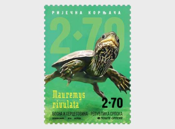 River Animals - River Turtle - Set