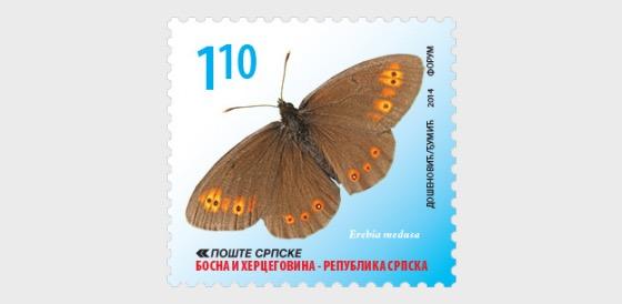 Butterflies - Erebia Medusa - Set