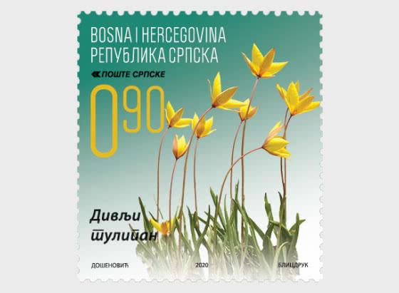 Flora - The Wild Tulip - Set
