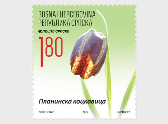 Flora - Fritillaria Montana Hoppe ex W.D.J.Koch - Set