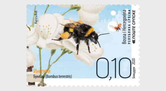 Insects - Bumblebee - Set