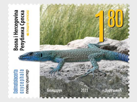 Fauna -  Blue lizard - Set