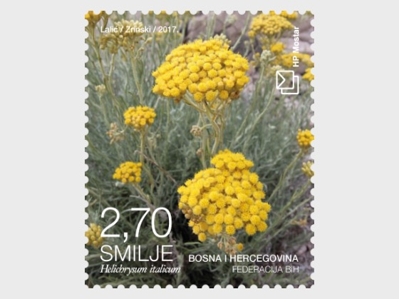 Flora 2017 - Helichrysum -  (Bloom) - Set