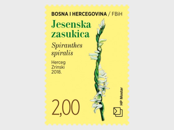 Flora 2018 - Spiranthes Spiralis - Set