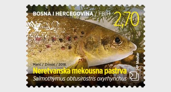 Fauna 2018 - Fish - Salmothymus Obtusirostris Oxyrhynchus - Set