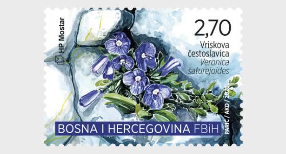 Flora 2020 - Veronica Saturejoides - Set