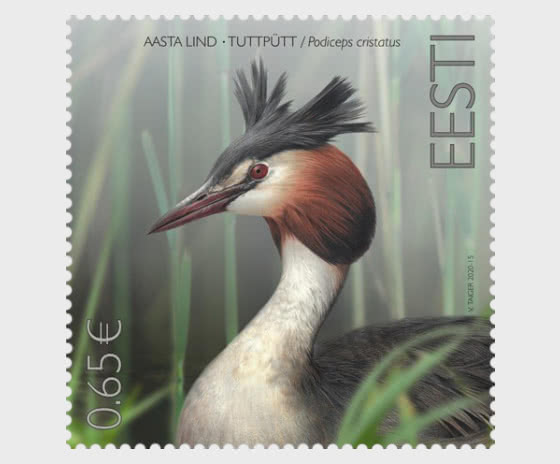 Bird of the Year - The Great Crested Grebe - Set