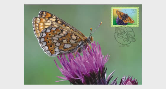 Butterfly Of The Year – Marsh Fritillary - Maxi Cards