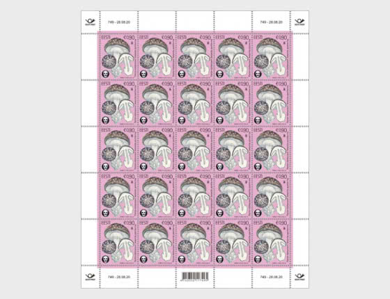 Champignons Cstoniens - Le Bonnet de panthère - Feuilles entières