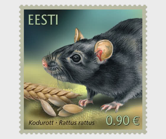 爱沙尼亚动物区系–黑老鼠 - 套票