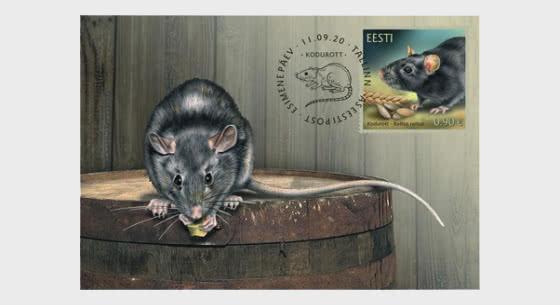 爱沙尼亚动物区系–黑老鼠 - 极限明信片