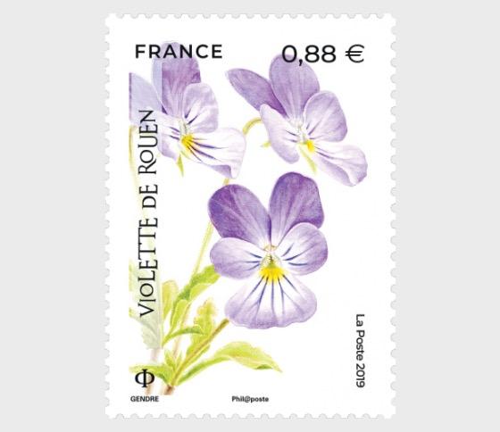 Flora in Danger - Violet of Rouen - Set