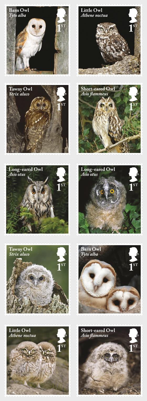 Owls - Set