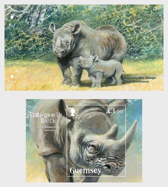 Endangered Species - The Black Rhinoceros - Presentation Pack