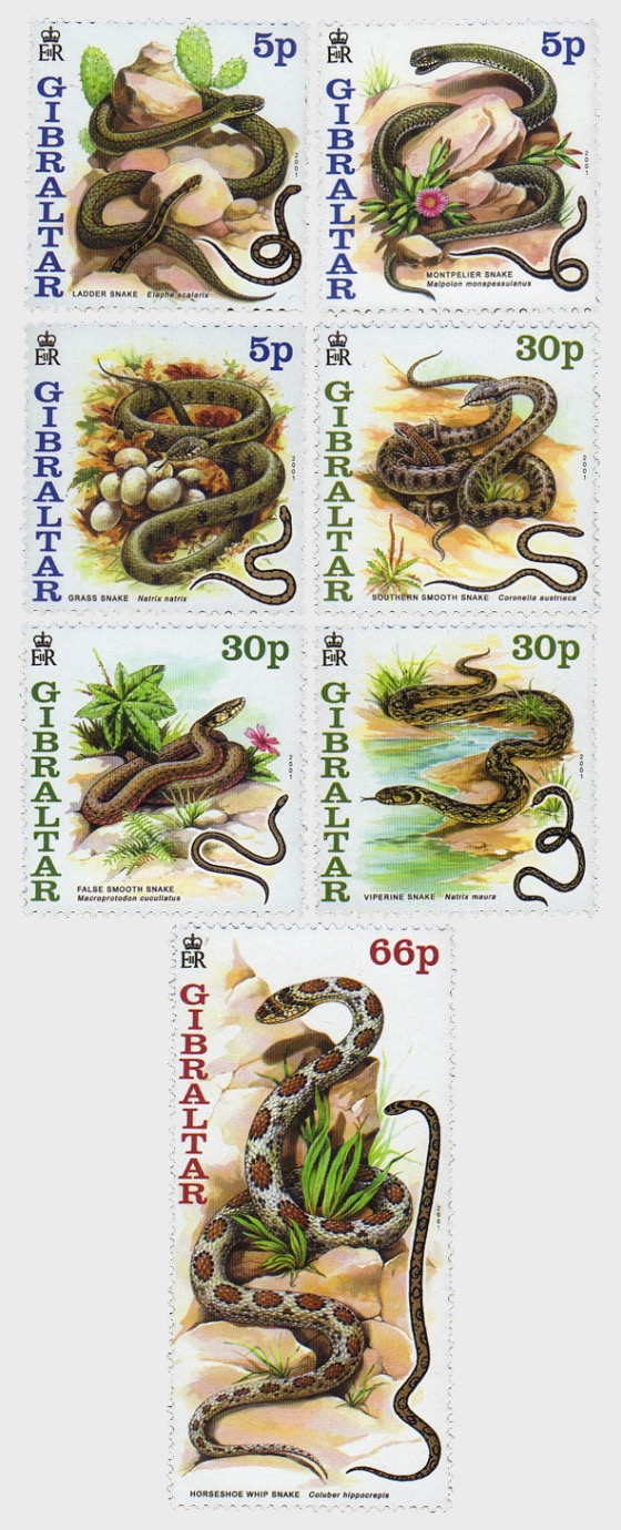 Snakes of Gibraltar - Set