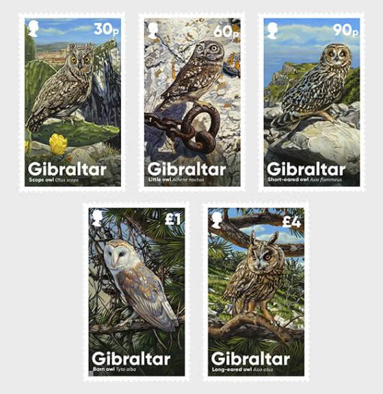 PRE-ORDER Gibraltar Owls - Set