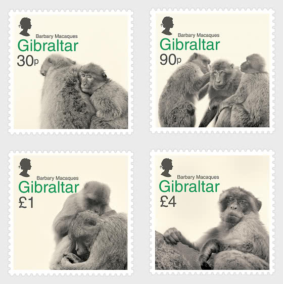Barbary Macaques - Mint - Set